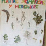 TALLER DE PLANTAS MEDICINALES